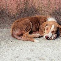 Абхазский щеночек :: Bermuda Разуева
