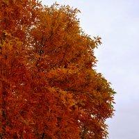 Золотая Осень в Детском Парке им.Кирова :: Grishkov S.M.
