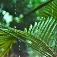 Тропический дождь :: Владимир Белозёров