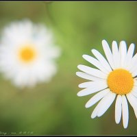 июльские краски средней полосы :: Igor Veter