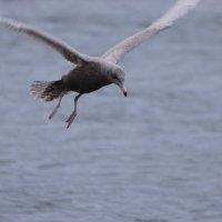 Взгляд с птичьего полета :: Александр Велигура