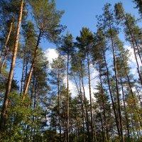 лес :: Ekaterina K