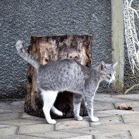 Милый кот) :: Katerina Andrievskaya