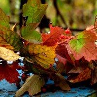 Осенняя палитра. :: ФотоЛюбка *
