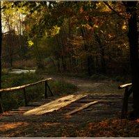 Через лес лежит моя дорога :: Ирина Данилова