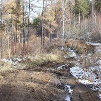 Первый снег :: Сергей Михайлов