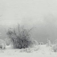 туман у теплого канала :: Олег Петрушов