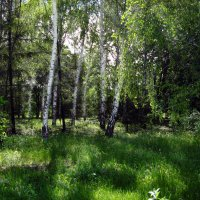 В прохладе парка :: Irina