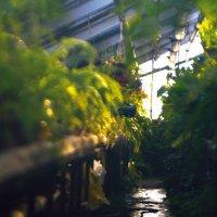 Оранжерея. Ботанический сад :: Тимур Гулиев