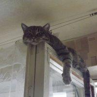 Мой кот :: Руслан Борсук