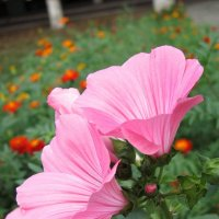 цветы :: Анастасия Пушкарева