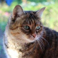 Кошка :: Ирина Буланова