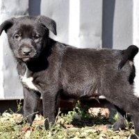 Отважный щенок :: Вероника Подрезова