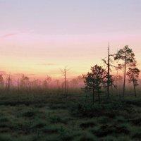 Рассвет на болотах. :: Алексей Хаустов