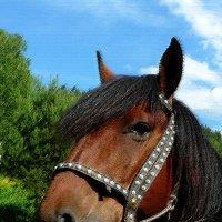 Лошадь в печали :: Надежда Егорова