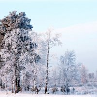 Зимний день. :: Алексей Хаустов