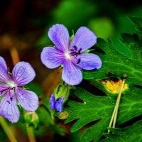 Цветы :: Андрей Домрачев