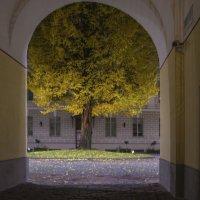 дерево в рамке :: Vasiliy V. Rechevskiy