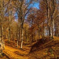 Желтый лес :: Ваган Мартиросян