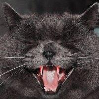 кот убийца :: Сашка Кошкин