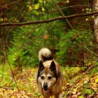 Бегущая собака :: Дмитрий