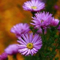 Цветы :: Дмитрий