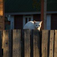 утром все кошки белы...)) :: Татьяна Копосова