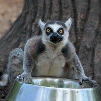 Когда голодный, я злой! :: Андрей Фиронов