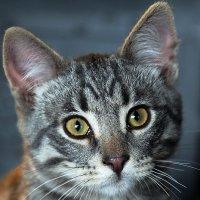 Котёнок Мур :: Леонид Макаров