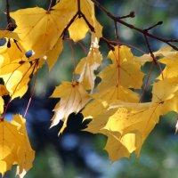 Осенний лист :: Яков Геллер