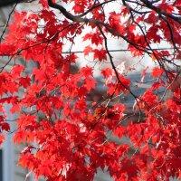 Осенний лист_1 :: Яков Геллер