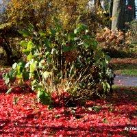 Просто осень :: Яков Геллер