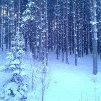 Зимний лес :: Elena Putina