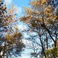 Такая терпкая клевая осень. (цитата из песни гр._Ночные снайперы_) :: Юля Юля