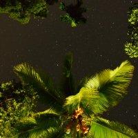 Кокосы и звёзды :: Владимир Белозёров