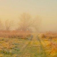 В тумане.. :: Сергей Рудницкий