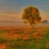 Одинокое дерево :: Сергей Рудницкий
