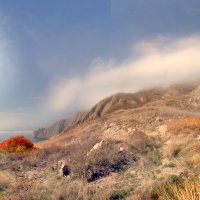 осенний туман похож на обман... :: viton