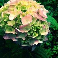 Flowers in August :: Полина Мамиева