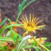 цветы в парке :: Marina Timoveewa