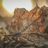 Поздняя осень :: Илья N