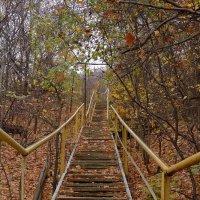 лестница в осень :: Андрей ЕВСЕЕВ