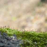 Танцующий мох :: Алёна Сульдина