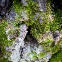 Многогранность природы :: Алёна Сульдина