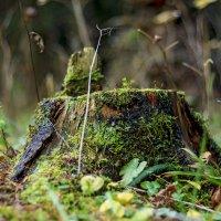 Лесные этюды :: Наташа С
