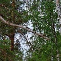Лесные дороги :: Вячеслав Печенин