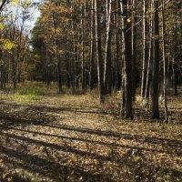 Осень :: Sem sem