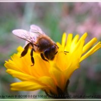 Ноябрьский мёд :: YakoV