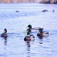 Тренировка на птичках 2 :: Мария Фадеева