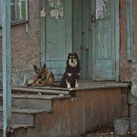 Иркутск :: Анжелика Марченко